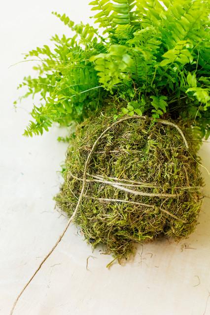 Lav japanske hængeplanter med naturlig potte hængepotte