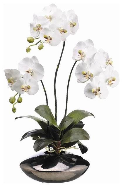 31 Quot White Phalaenopsis Orchid Plant In Ceramic Pot