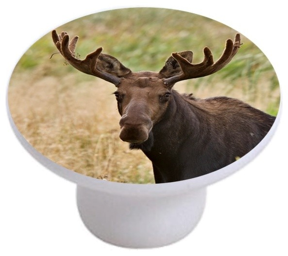 Carolina Hardware and Decor, LLC - Moose Ceramic Cabinet Drawer Knob & Reviews | Houzz