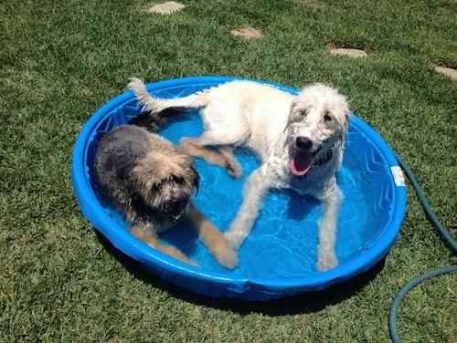 【Houzz】ペットが安全で快適に夏を過ごすためのポイント 16番目の画像
