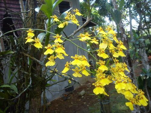 Fantastic Filipino Flowers
