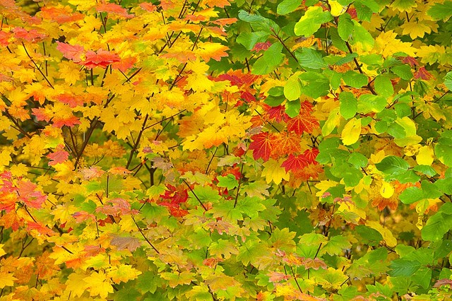 Colorful Oregon Autumn Forest Wallpaper Wall Mural, Self Adhesive  Contemporary Wall Decals Part 64