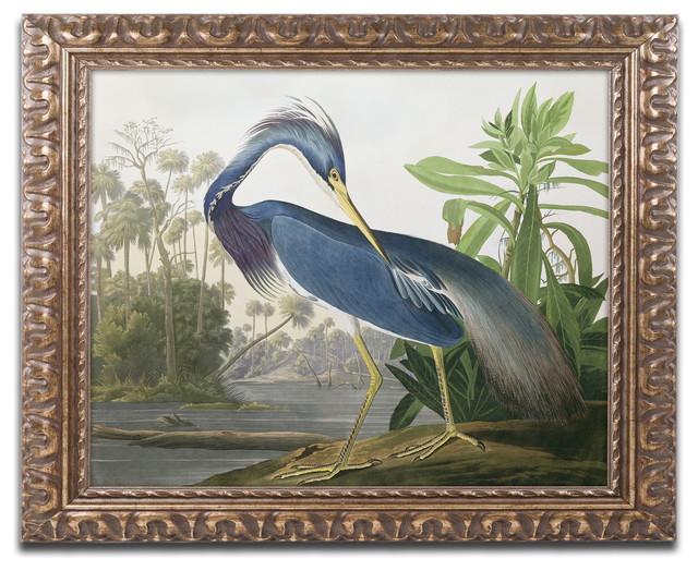 Louisiana Heron Ornate Framed Canvas Art By John James Audubon