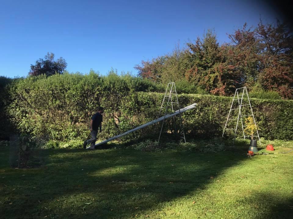 Pruning, Garden Maintenance