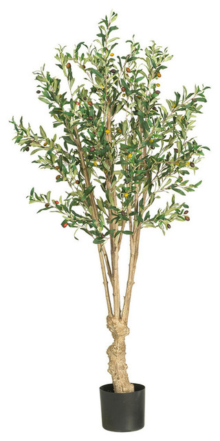5' Olive Silk Tree