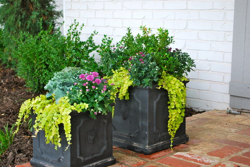 Fall Container Gardens