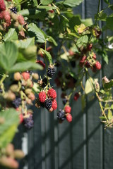 Which Fast-growing Edible Crops Can I Plant Right Now?