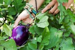 Sélection de légumes à planter en juin