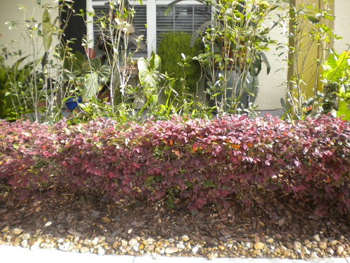 Heads up Florida Cottage Garden Tragics