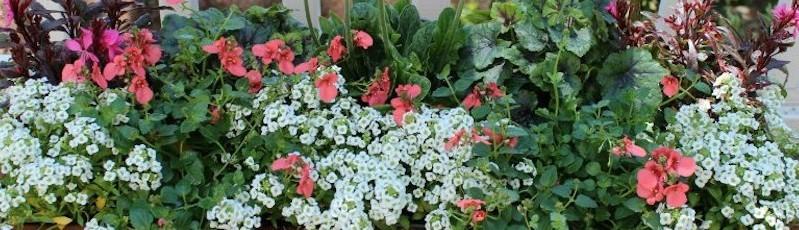 Garden Wise Nursery