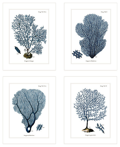 "Set Of 4, Navy Blue Sea Coral Fans Naturalist Collection 8""x10"" Prints O."