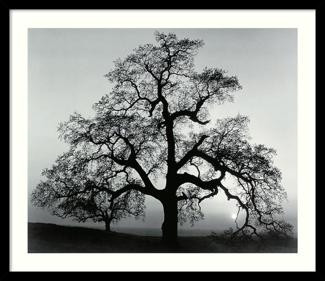 oak tree sunset city california 1962 framed print by ansel adams prints