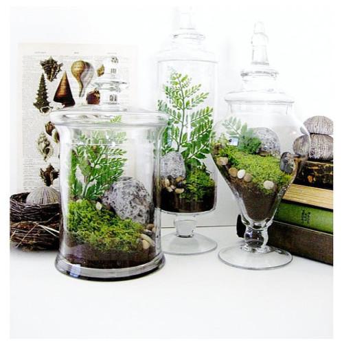 Garden Lovers Terrarium Gift Set in Apothecary Jars by Doodle Birdie klassisk-terrarier