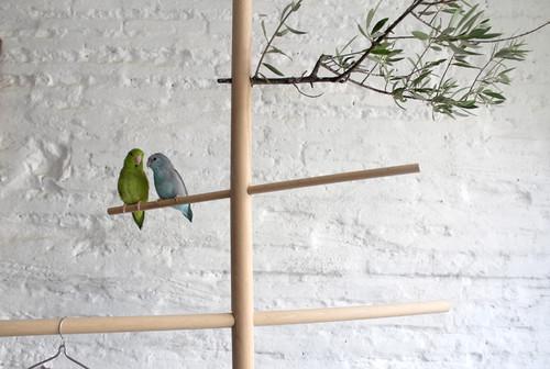 Una percha para pájaros
