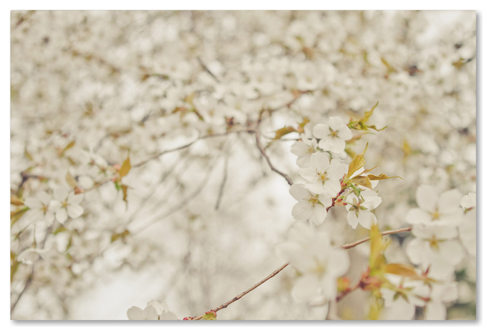Ariane Moshayedi White Cherry Blossoms Canvas Art Contemporary Prints And Posters By Trademark Global