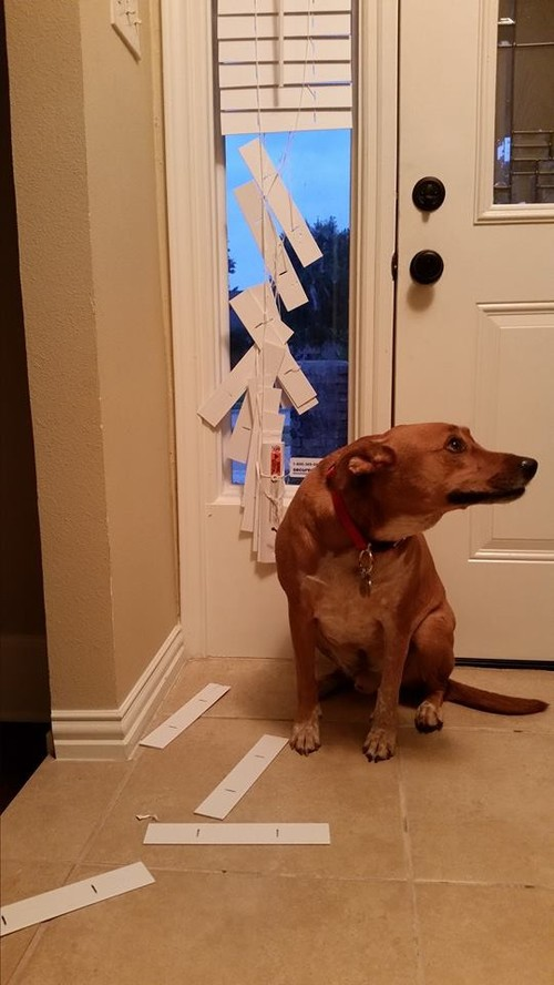 Front Door Sidelight Privacy Options With Rambunctious Guard Dog