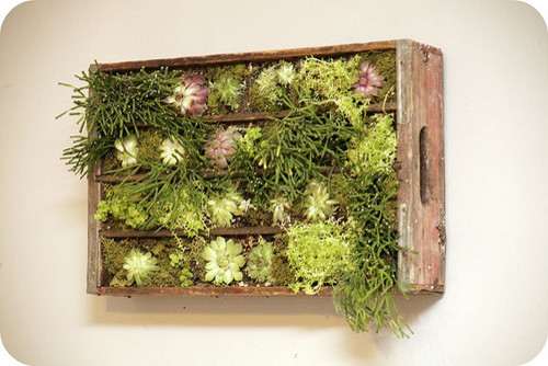 Soda Crate Wall Plantings modern