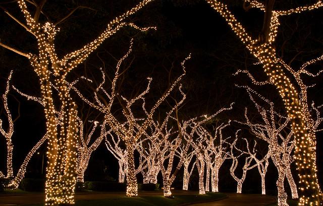 LED Christmas Tree Lighting