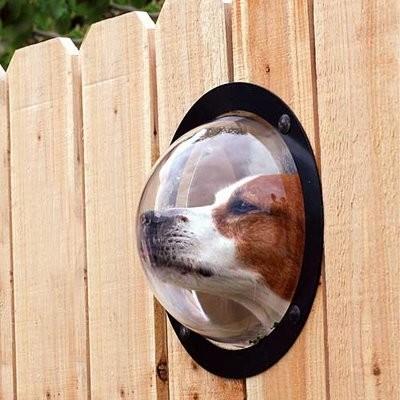 Dog Peek