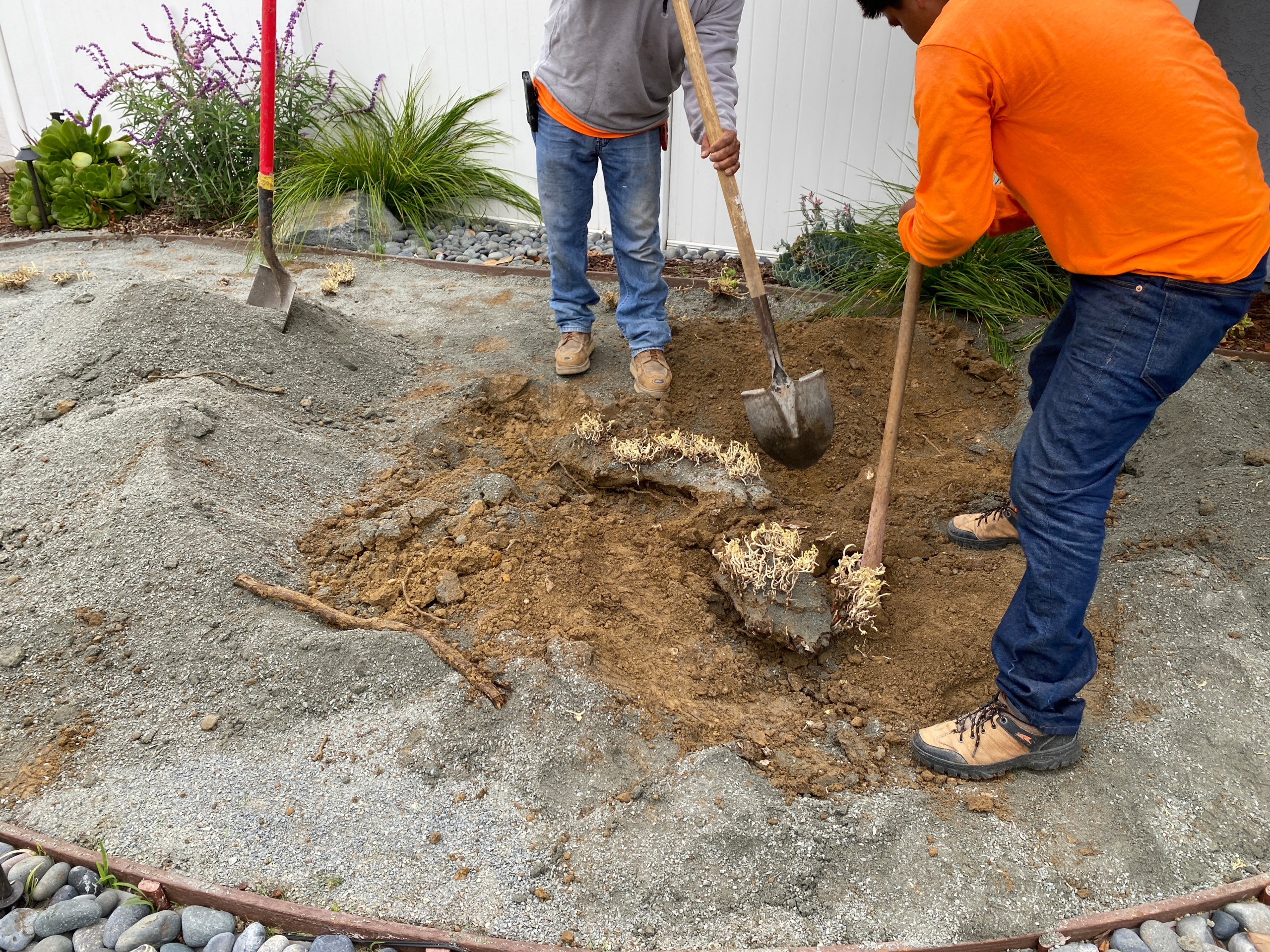 Removing Tree Roots in Bay Ho