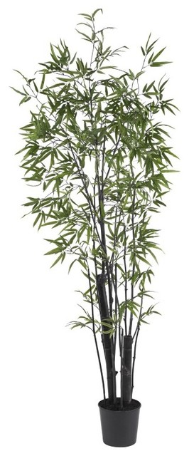 6 Black Bamboo Silk Tree 2 Thick Trunks Green