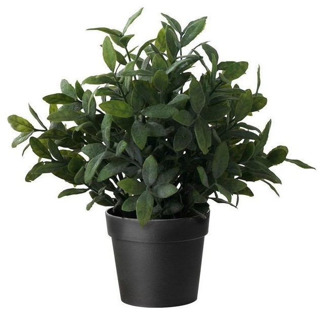 kedyrolo llc ikea artificial potted plant sage 9 5 artificial flowers plants and trees houzz. Black Bedroom Furniture Sets. Home Design Ideas