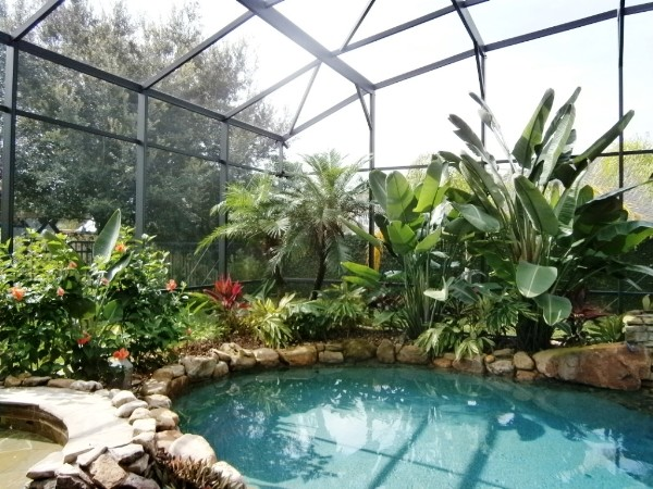 Lake Mary Heathrow Fl Tropical Pool Landscape Design Garden