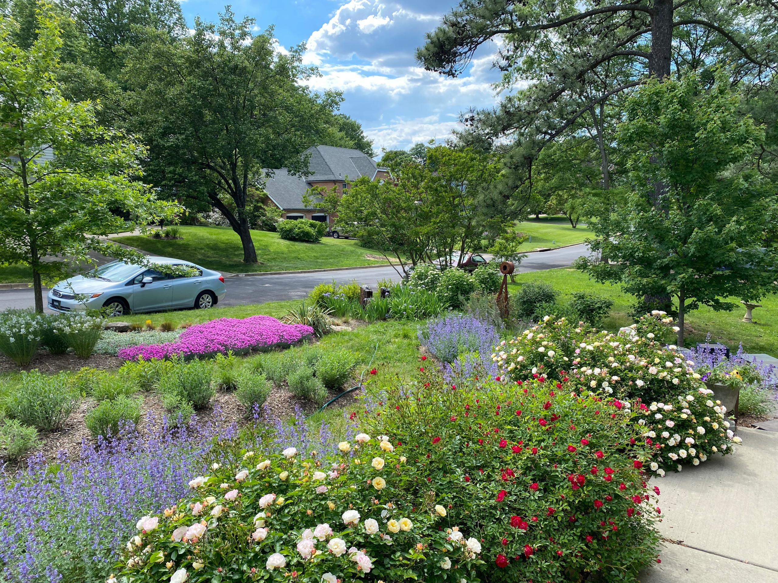 Front Yard Pollinator Paradise