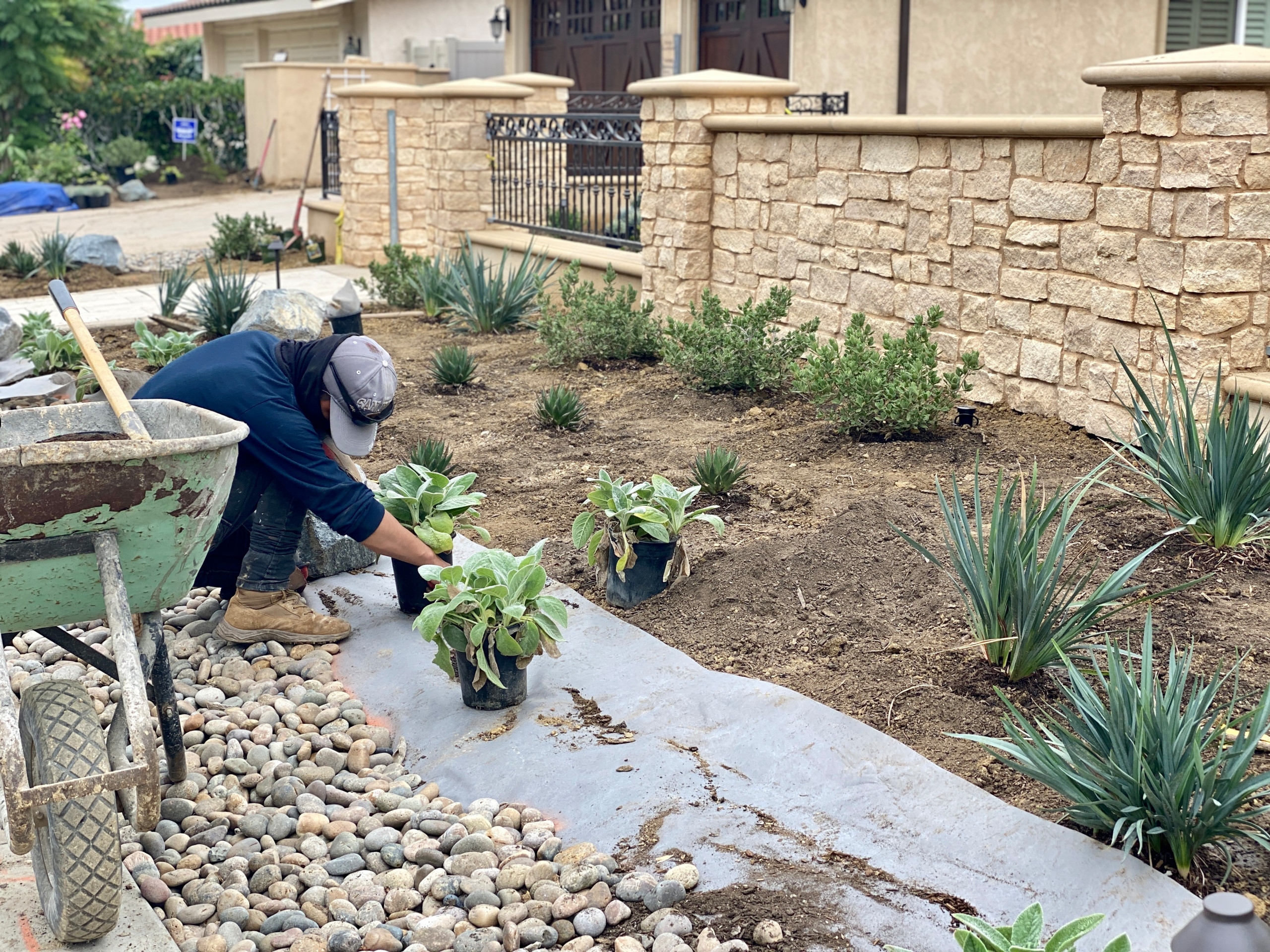 Installing New Plants Material in La Jolla