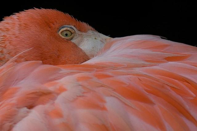 Pretty In Pink Flamingo Wallpaper Wall Mural Self Adhesive