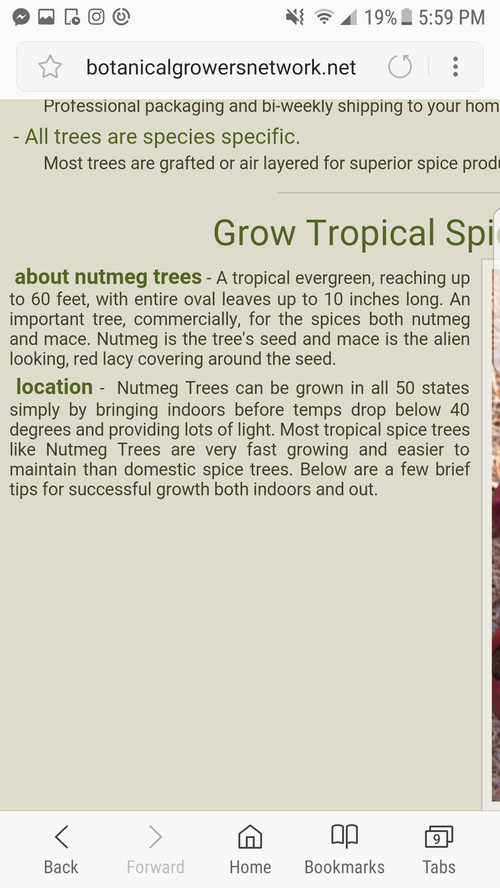 how to grow nutmeg from seed