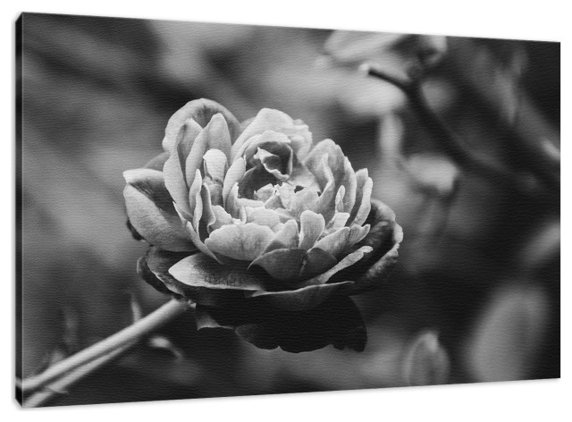 Perfect Petals High Contrast Black And White Fine Art Canvas Wall Art Print Contemporary Fine Art Prints By Pi Photography Wall Art Fine Art