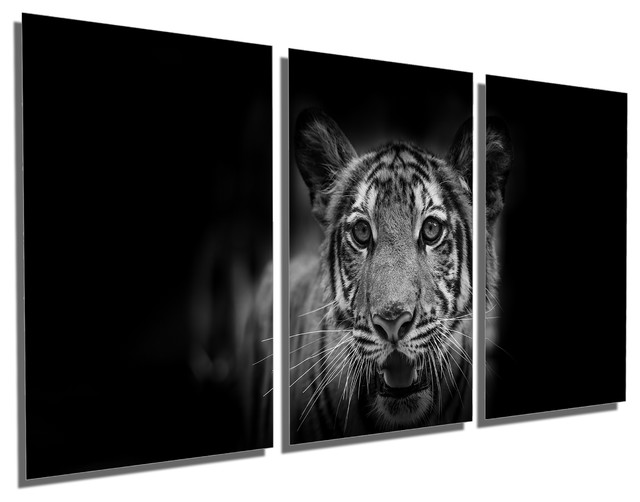 Young Tiger Cub BW Portrait Metal Print Wall Art 3 Panel Split 36x18