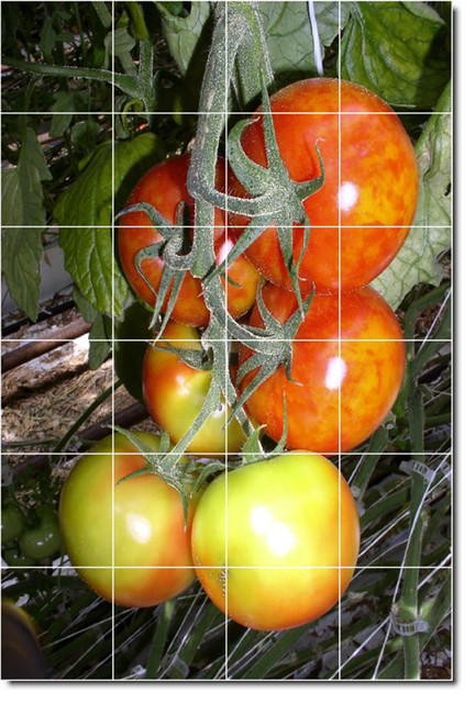 Fruits Vegetables Photo Kitchen Tile Mural 19 Traditional Tile