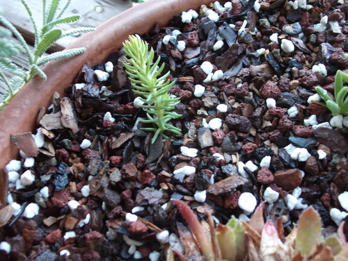 how to make succulent potting mix