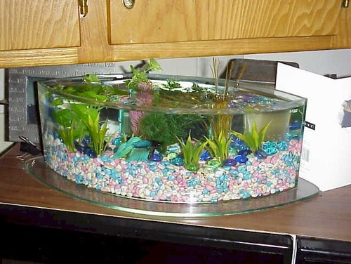 Do bettas mix well with other fish for What kind of fish can live with a betta