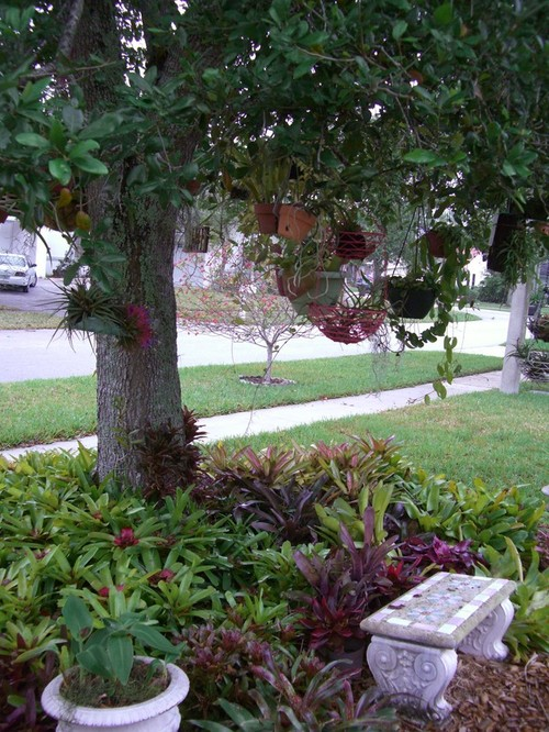 Landscaping Ideas Around Oak Trees : Landscaping ideas around oak trees pdf