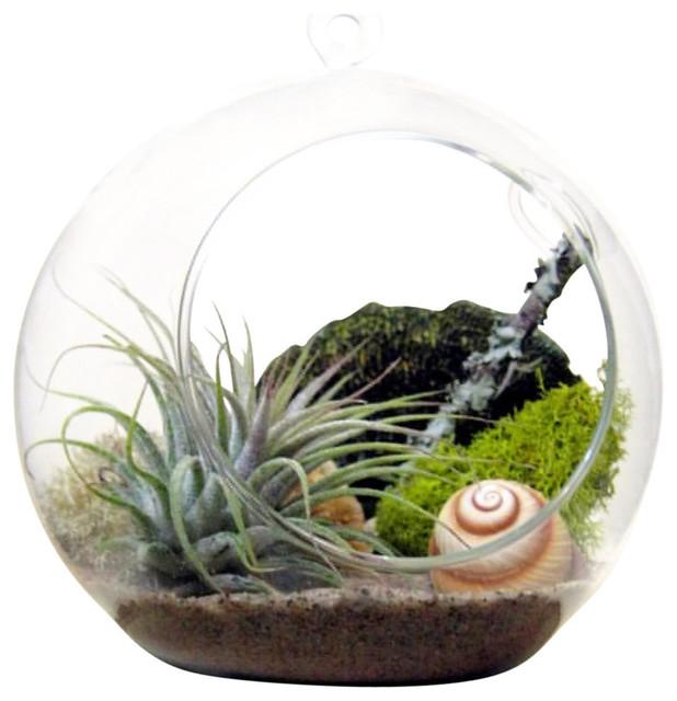 Shop Houzz | Sea & Asters Spiral Air Plant Terrarium - Terrariums