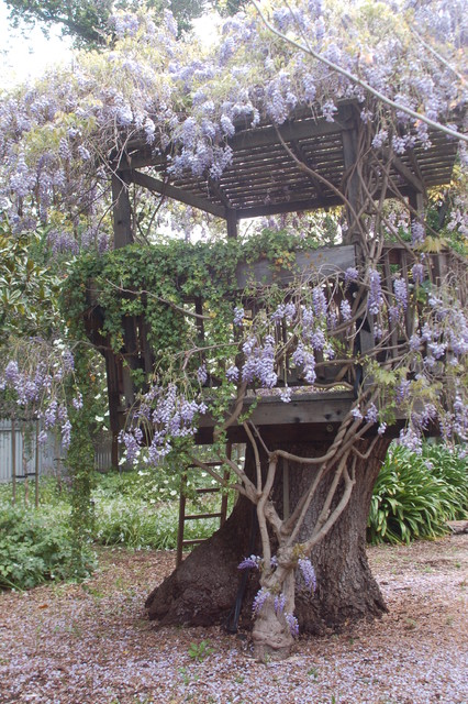 Wisteria Tree House Rustic San Francisco By Karen
