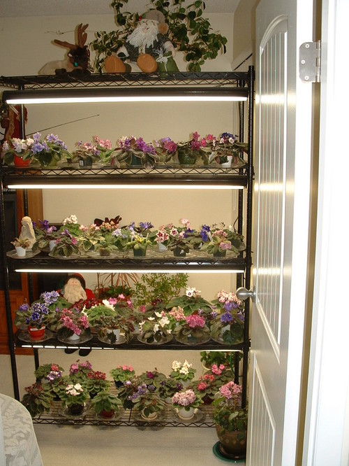 Share your pic of growing shelf for Plant shelf plans