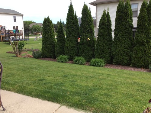 Need backyard privacy for Trees for privacy small garden
