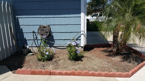 Landscaping ideas for Help me landscape my front yard