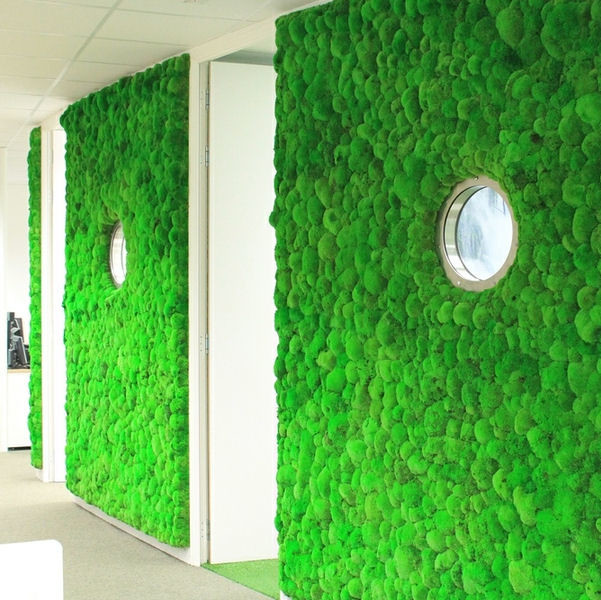 Moss Wall With Preserved Bun Modern Oxfordshire