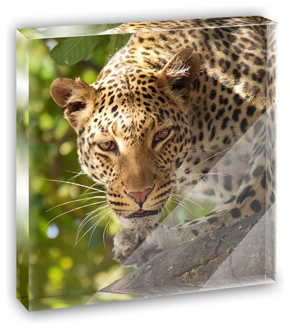 Leopard Print African Safari Mini Desk Plaque and Paperweight