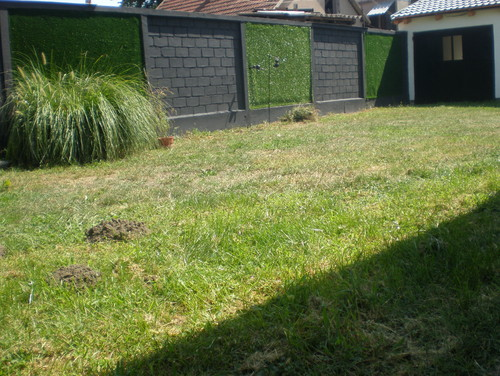 Conseil plantation contre murs jardin for Conseil plantation jardin