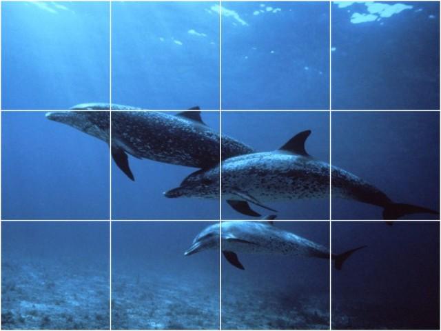 Dolphin photo wall back splash tile mural 1484 beach for Dolphin tile mural