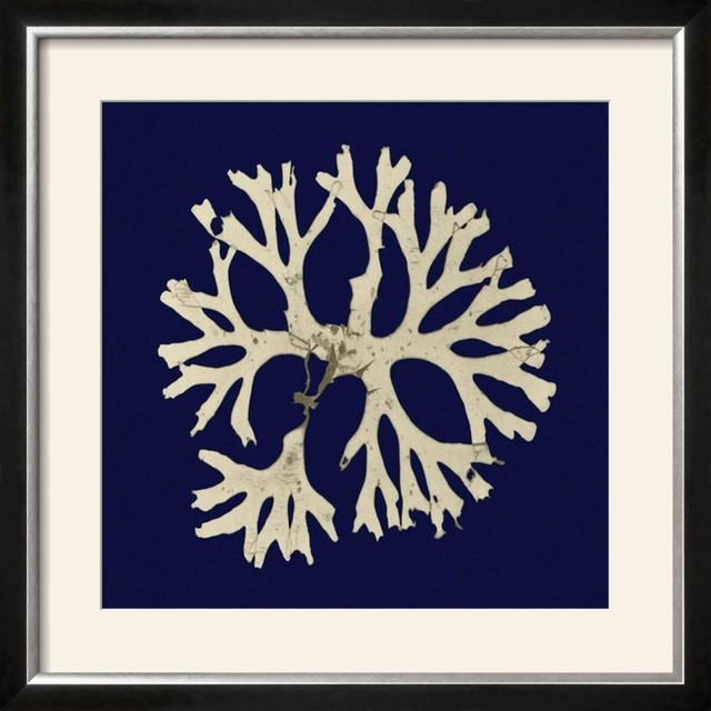 Seaweed On Navy I Wall Art By Vision Studio.