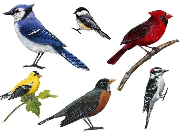 Song Birds Combo Pack Wall Decal. -1