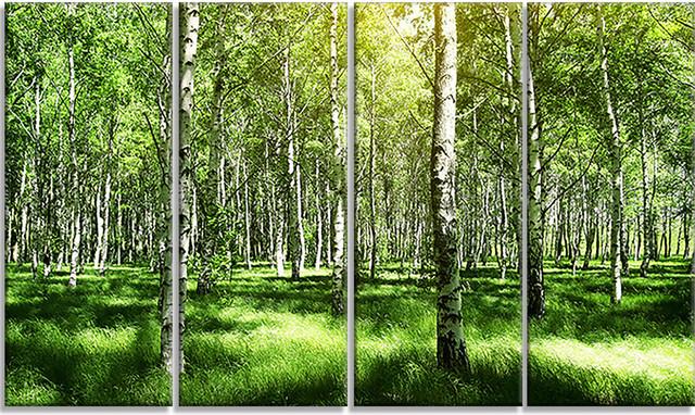 Beautiful Birch Grove Landscape Canvas Art Print, 48x28, 4-Piece.
