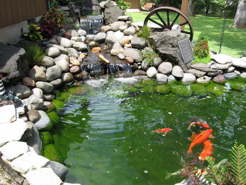 Koi pond leaks and rubberize it for Koi fish pond size